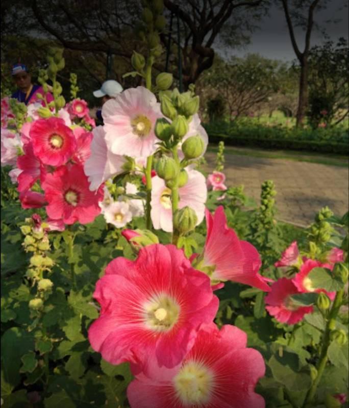 ที่วิ่งในกรุงเทพสวนสมเด็จพระนางเจ้าสิริกิติ์สถานที่ออกกำลังกายในกรุง เปิดทำการทุกวันจันทร์ถึงอาทิตย์ ที่เต็มไปด้วยดอกไม้นานาพันธุ์